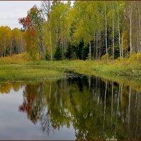 Осенняя тишина.. :: Светлана