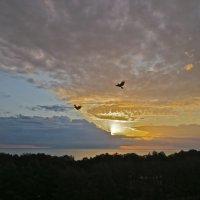 восход над заливом :: Елена