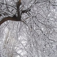 зима :: tgtyjdrf