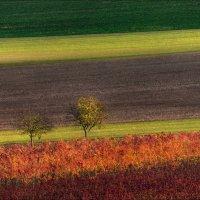 Осенние диагонали :: Влад Соколовский