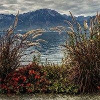 autumn in the Swiss Riviera :: Dmitry Ozersky