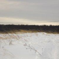 Снежно :: Алексей Медведев