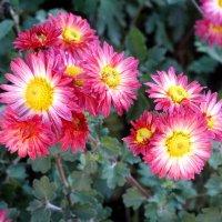 Цветы в ноябре... :: Тамара (st.tamara)