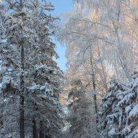 Зимнее утро :: Гулько Т