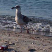 The Box - пляж эмоций. Курить, лететь, а ли нырнуть ... :: Александр Резуненко