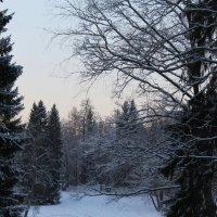 Зимнее таинство.... :: Tatiana Markova