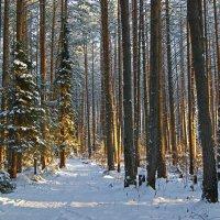 Лес в декабре. :: Наталья