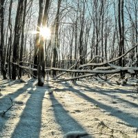 Про солнце зимнее лесное.. :: Андрей Заломленков