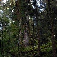 В сумраке горного леса ! :: Виталий Селиванов