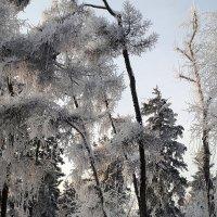 Зимний наряд. :: Наталья Тимофеева