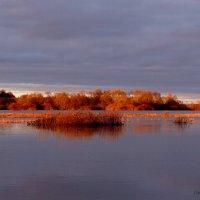 Река и поле слились, осенний разлив.. :: Антонина Гугаева