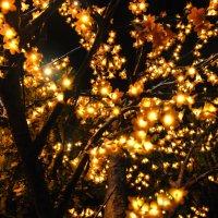 Сказочно цветут деревья... :: Надя Кушнир