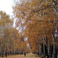 Осень. :: венера чуйкова