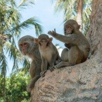 В окрестностях Нячанга, Южно-китайское море, Северные острова. Остров обезьян. :: Виктор Куприянов