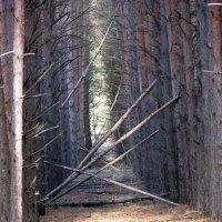 в лесу :: tgtyjdrf