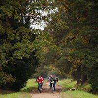Велосипедные прогулки. :: юрий