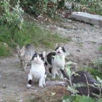 Коты в ожидании  новой криптовалюты... :: Алекс Аро Аро