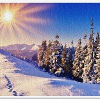 Яркое солнце зимы :: Лидия (naum.lidiya)