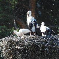 Гнездо :: Александр Михайлов