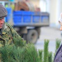 А это крымская сосна или сибирская? :: Юрий Гайворонский