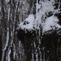 поймала в чаще дикое животное:) :: sv.kaschuk