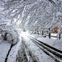 Первый снег :: Игорь Д