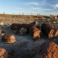 Вечер в пустыне и осколки окаменевшго леса росшего здесь 225 миллионов лет назад (США) :: Юрий Поляков