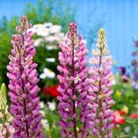 ....у подъезда летом такая красота.... :: Светлана Игнатьева