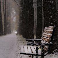 Тишина зимнего парка :: Андрей Михайлин