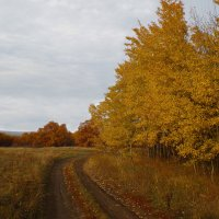 Золотая осень :: Михаил Пахомов