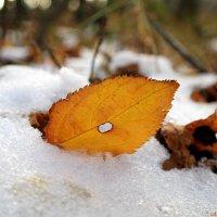И в грудь прострелянный морозом листок сдаваться не хотел.. :: Андрей Заломленков