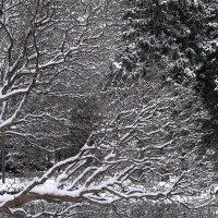 Графика зимнего парка :: Alexander Varykhanov