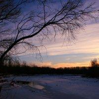 Самый тёмный месяц года, засыпает вся природа ... :: Евгений Юрков