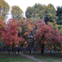 Осень :: Alexandr Yemelyanov