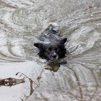 Заплыв в ледяной воде :: Dr. Olver ( ОлегЪ )