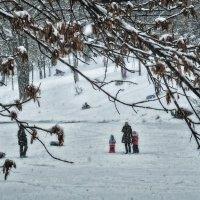 Зима :: Игорь Свет