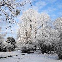 Парк острова Канта в снежном убранстве :: Маргарита Батырева