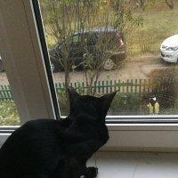 Знакомство через стекло, безопасное :: Наталья