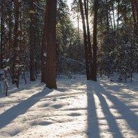 Проложил декабрь в январь лыжню... :: Лесо-Вед (Баранов)