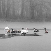 Туманным морозным утром на озере :: Маргарита Батырева