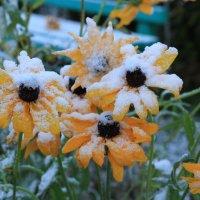 Первый снежок. :: Андрей