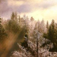 лес сказочный :: Elena Wymann