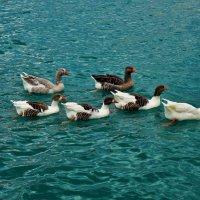 И турецкие гуси,с любопытством наблюдали за нами... :: Sergey Gordoff
