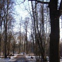 март в Измайловском парке :: Анна Воробьева