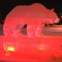 Медведь :: Наталья Пендюк Пендюк