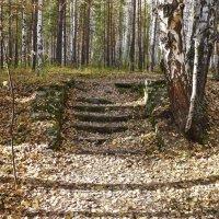 Лестница в глухом лесу :: Светлана Игнатьева