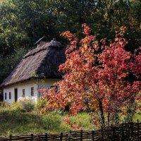 Калина. :: Sergii Ruban