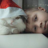 мальчик,кот и Новый год! :: Александр Шаханов