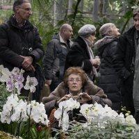 Ботанический сад. Выставка орхидей. :: Александр Русинов