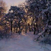 Заброшенный сад и зимний закат :: Любовь